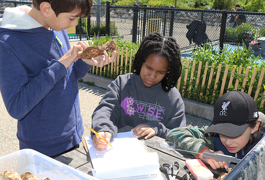 billion oyster project students collecting data