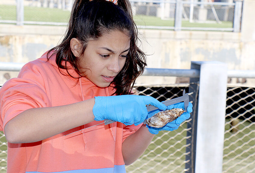 billion oyster project student examining oyster
