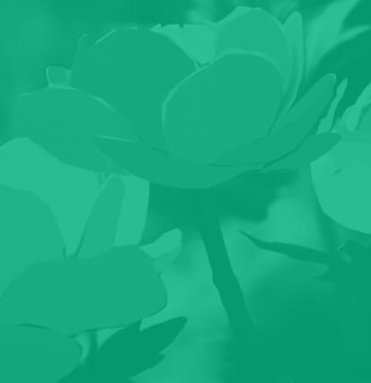 Flower image for grid